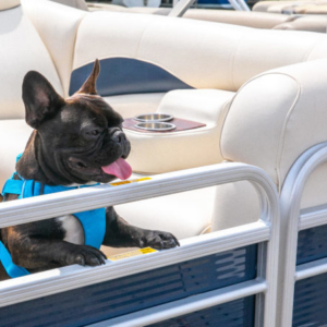 French Bulldog on Pontoon